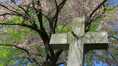stock-footage-cemetery-cross-statue-in-spring-with-blooming-pink-dogwood-and-sky-background