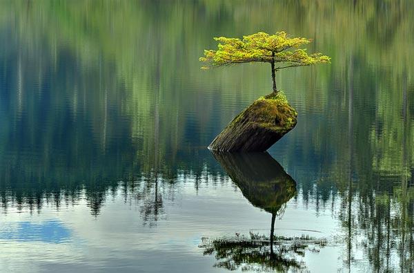 tree_on_dead_log